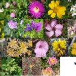 Mayo, mes de las flores en Mundosol Quality
